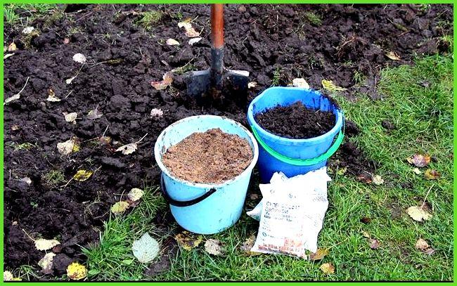 Подкормка картофеля минеральными удобрениями