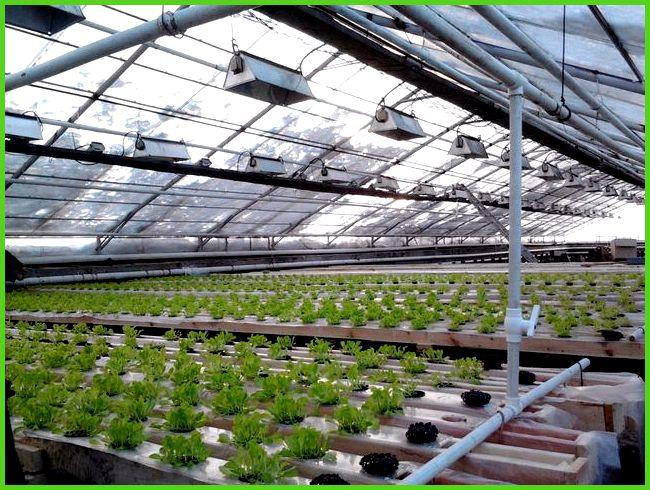 Что можно выращивать в теплице из поликарбоната зимой?