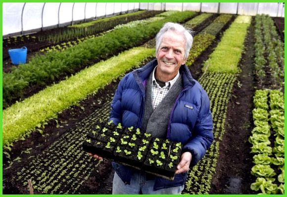 Выращивание овощей в зимнее время 19