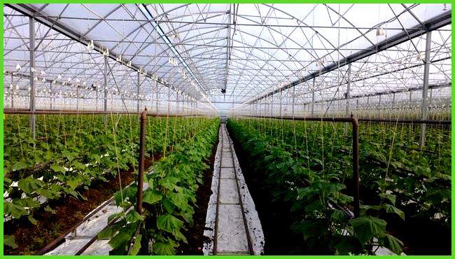 Выращивание овощей в закрытом грунте оквэд 9