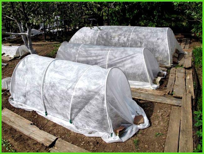 Парник для перцев своими руками: из поликарбоната, как выращивать ...