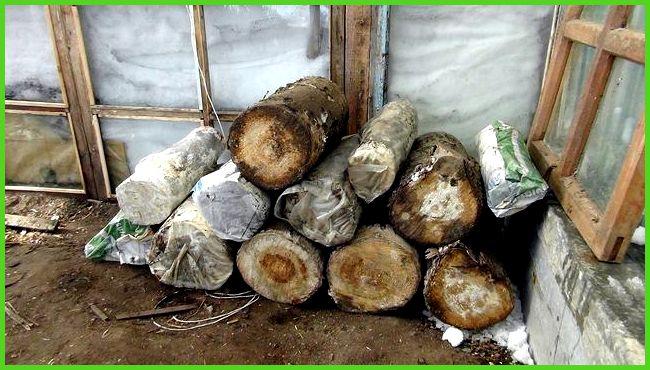 Грибы на пнях: секреты выращивания в домашних условиях