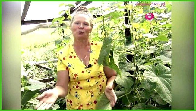 Выращивание огурцов в зимний период