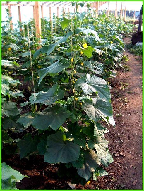 Попробуйте подсушить земляной ком растение можете периодически опрыскивать.