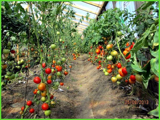 Что посеять в парнике зимой – особенности круглогодичного выращивания