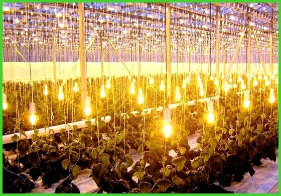 светодиодные лампы для теплицы зимой собрана всего