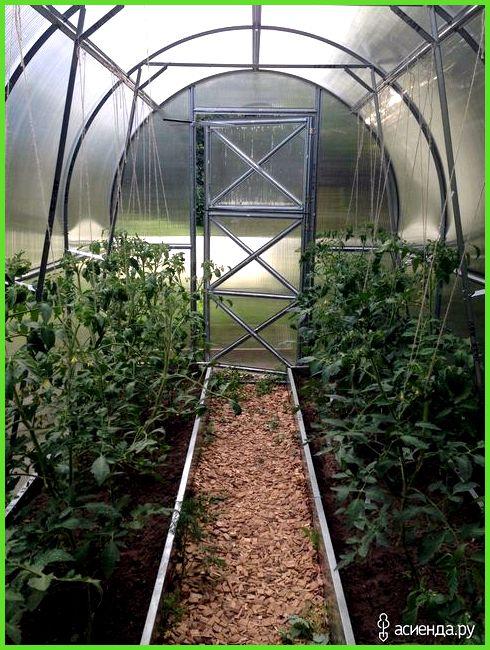 способы выращивание огурцов в открытом грунте фото