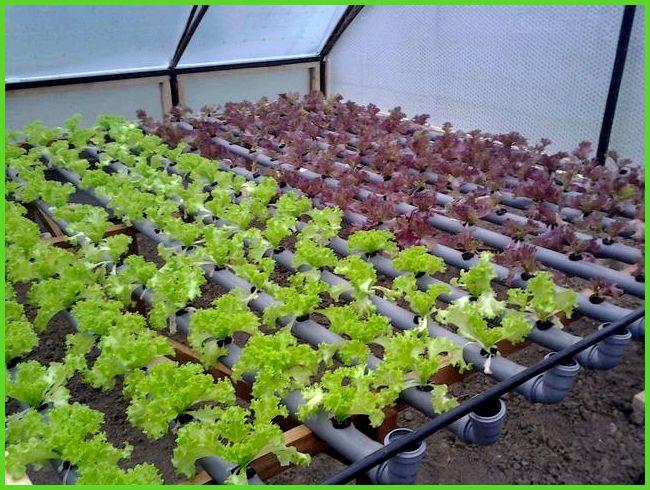 Бизнес на рассаде овощей и цветов 631