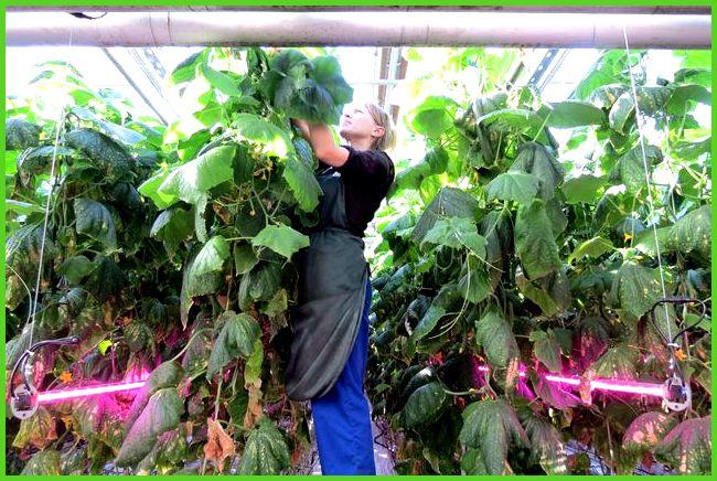 Выращивание овощей в теплицах как бизнес 74