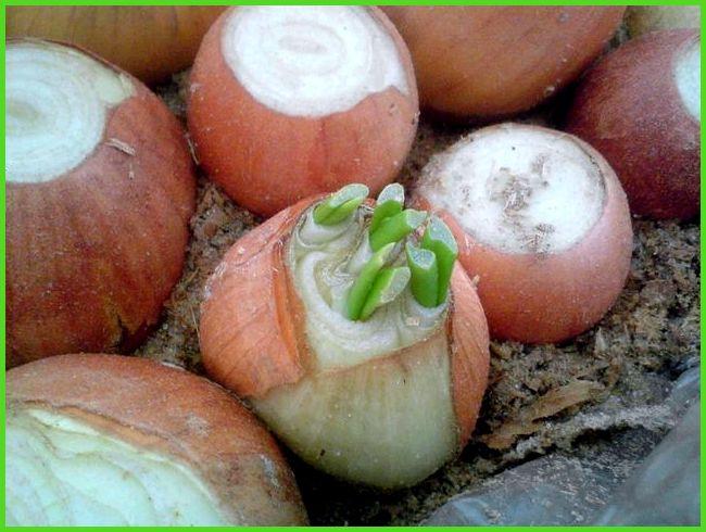 Чем обработать землю в теплице: под томаты, помидоры, весной, почвы, перед посадкой