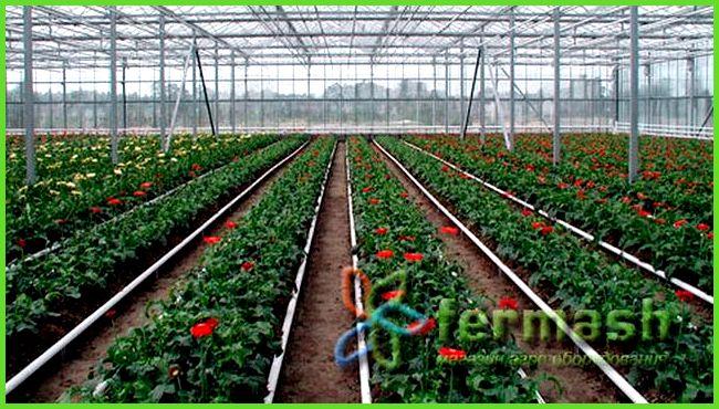 Выращивание лука как бизнес рентабельность 41