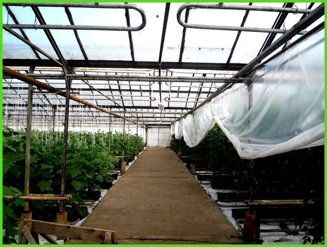 Выращивание цветов в теплице как бизнес: на продажу, в 2