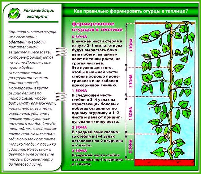 Как построить теплицы для выращивания ...
