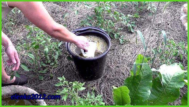 Удобрения для помидоров в теплице: чем удобрять, минеральные ...