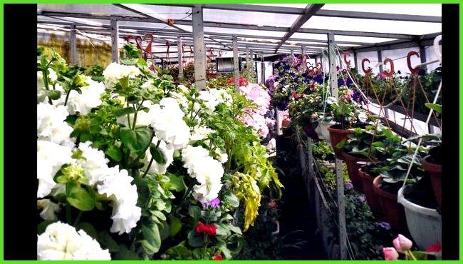 теплица красмаша продажа цветов