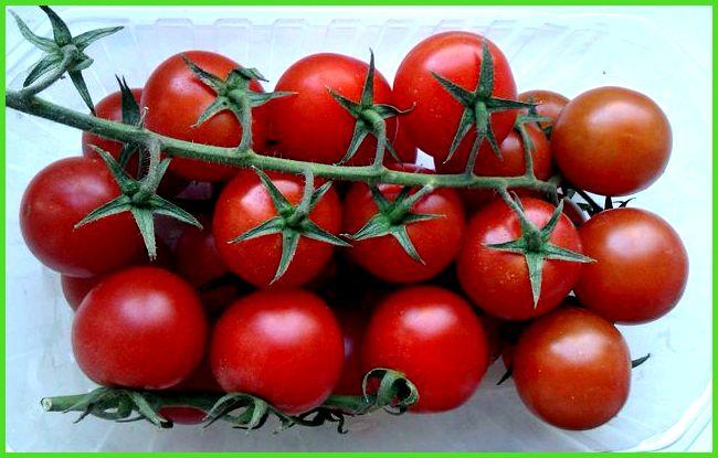 лучшие кистевые томаты для теплиц