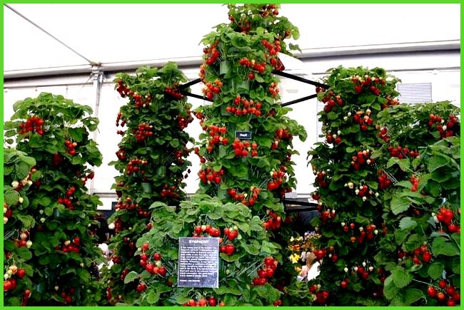 strawberry tower | Garden | Pinterest