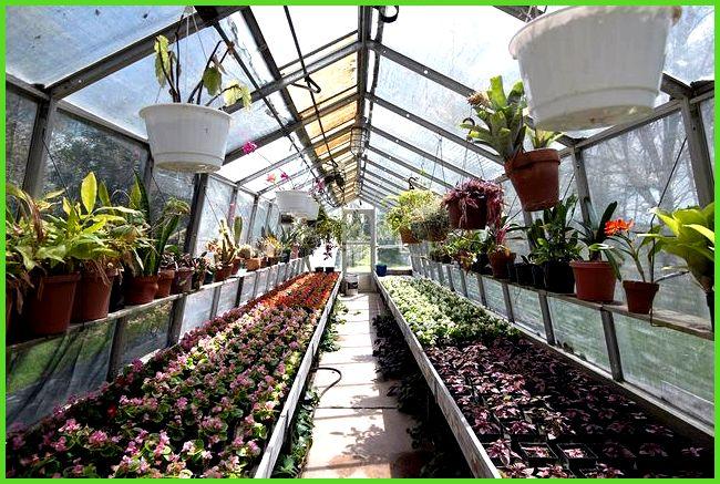 Какие цветы и в какое время года можно выращивать в теплице