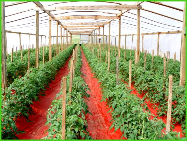Greenhouse farming is the production of crops within sheltered ...
